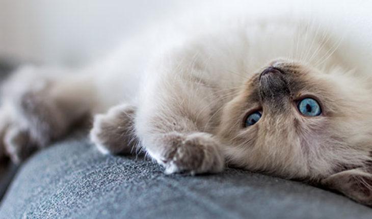 Agria cat insurance