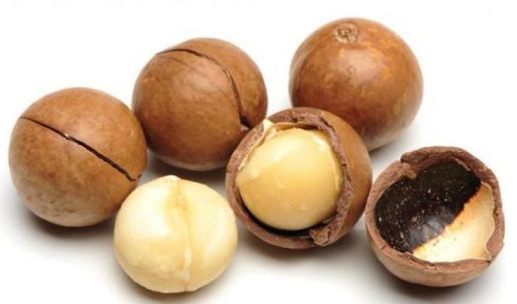 Know More About Macadamia Nuts