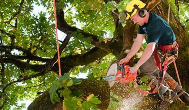 Take care of tree with the proper servicing